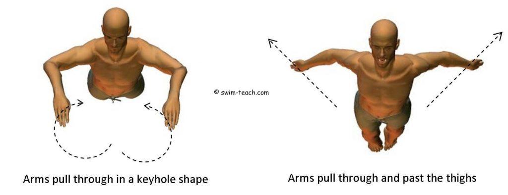 kelebek yüzme kol çekişi nasıl olmalıdır